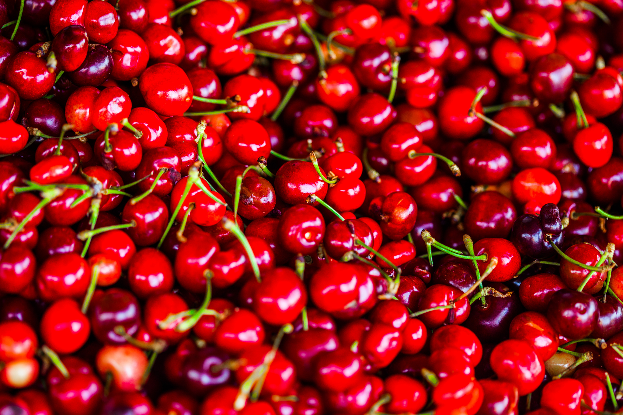 Wide angle photograph of red cherries