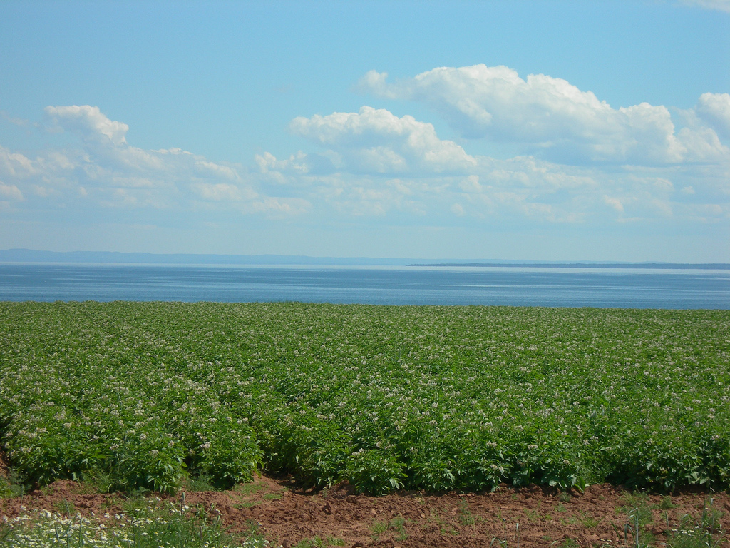 Potato Fields - Prince Edward Island Jimmy Emerson, DVM https://flic.kr/p/8ohuha CC BY-NC-ND 2.0 https://creativecommons.org/licenses/by-nc-nd/2.0/