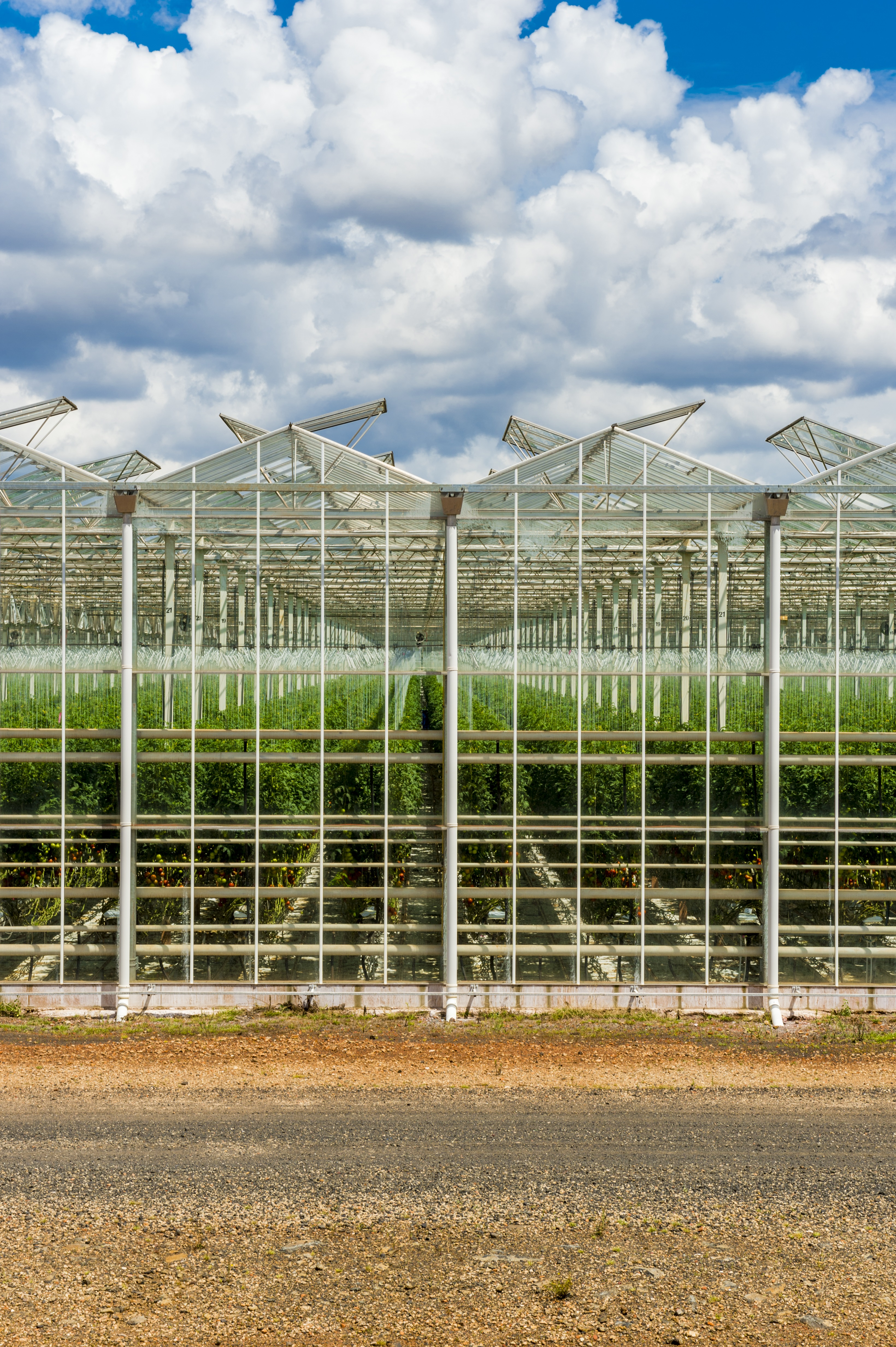 Greenhouse image © Costa Group